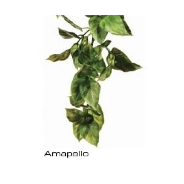 Plante Suspendre Amapallo Exoterra Pt3011 Plantes