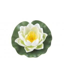 Lotus blanc 10cm
