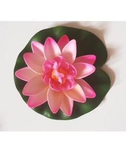 Lotus fushia 10cm