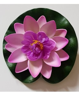 Lotus purple 10cm
