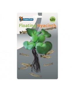 Jacinthe flottante