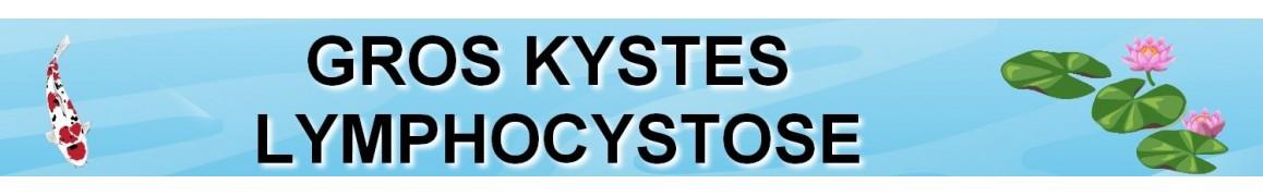 Traitement carpes koi contre les GROS KYSTES / LYMPHOCYSTOSE