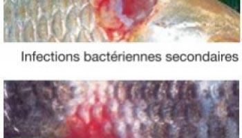 Reconnaître les maladies de poissons?